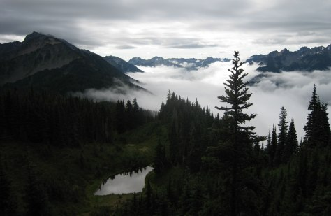 Image: Fog-shrouded Olympic National Park