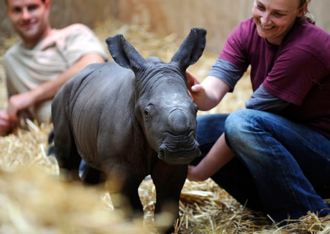 Image: A baby rhino is cared for by zoo keepers in Germany