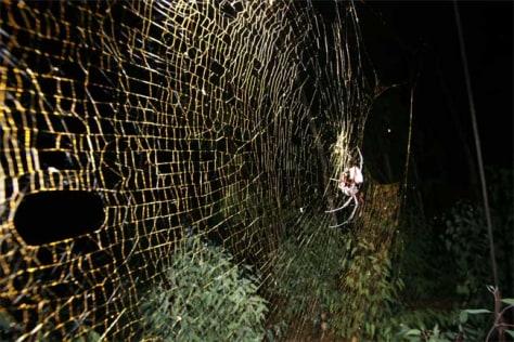 Image: Spider, web