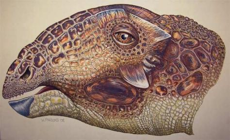Image: Tatankacephalus cooneyorum