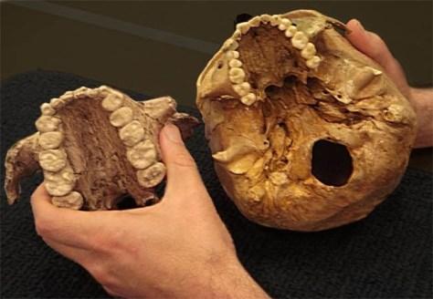 Image: Paranthropus boisei, human skulls