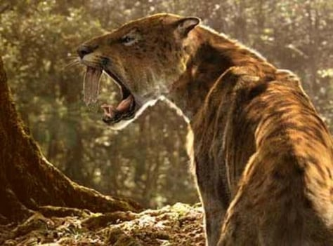 Image:  Sabertooth cat