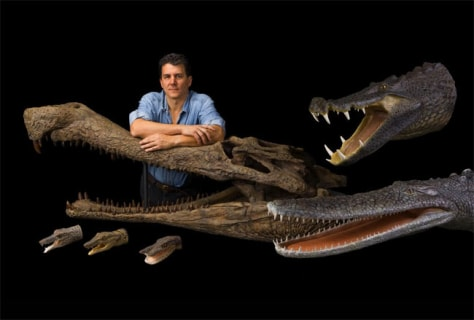 Image: Crocodile remains
