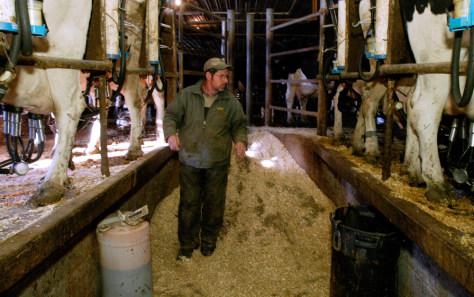 Image: Dairy farmer
