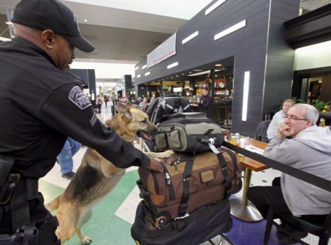 Image: Dog sniffing bags