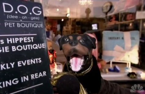 Image: Triumph the Insult Comic Dog