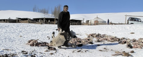 Image: Herdsman removes skins of dead goats