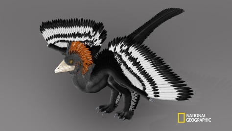 Image: Anchiornis huxleyi