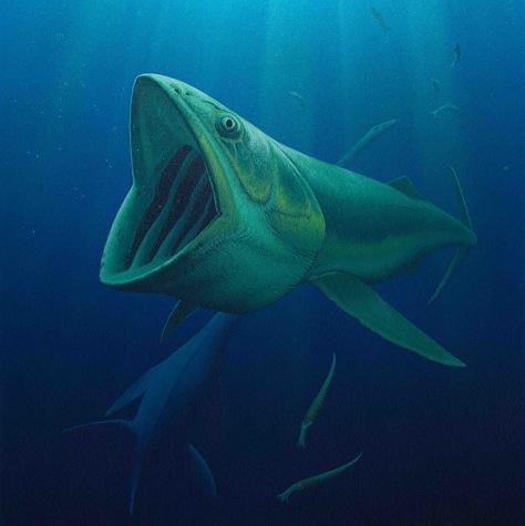 Image: Bonnerichthys