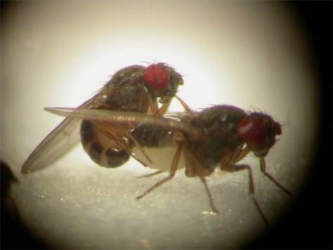 Image: Flies