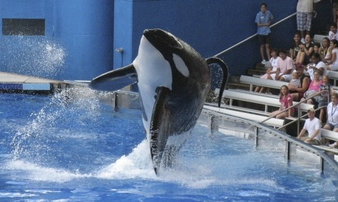 Image: SeaWorld performance