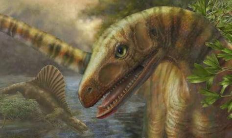 Image: Asilisaurus kongwe
