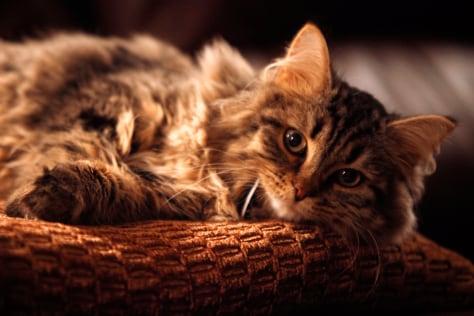 cat deterrent top of fence