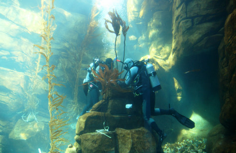 Image: Kelp forest under construction