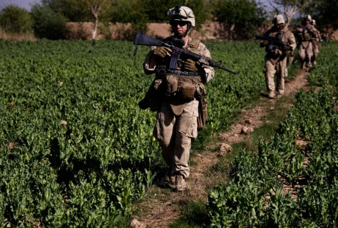 Image: U.S. troops walk through a poppy field
