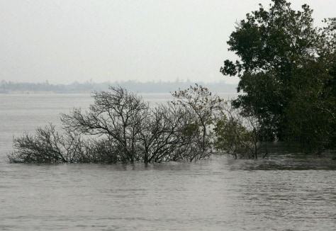 Image: Water covers trees in Sundarban delta