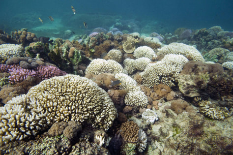 Image: Bleached coral