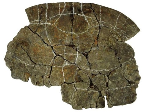 Image: Turtle shell