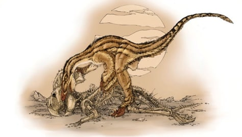 Image: Velociraptor