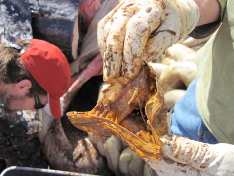 Image: Plastic found inside whale stomach