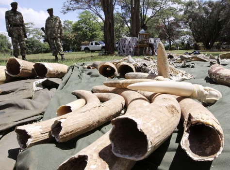 Image: Confiscated elephant tusks