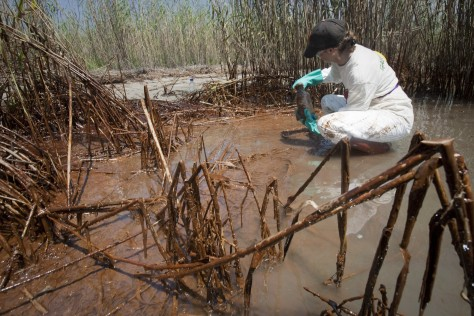 Image: Greenpeace staff member takes sample of water in heavily oiled marsh.