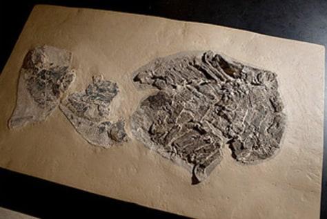 Image: Shark fossil