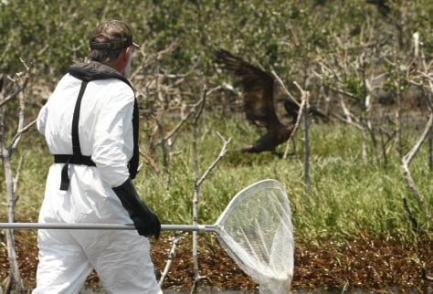 Image: Oil-soaked pelican flees official
