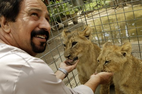 Image: Sabah al-Azawi hand feeds two African lion cubs