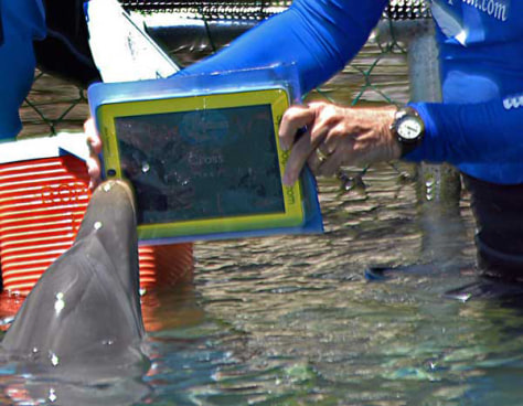 Image: Dolphin and iPad
