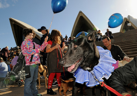 Image: Dogs, owners at Sydney Opera House