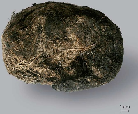 Image: Mammoth dung