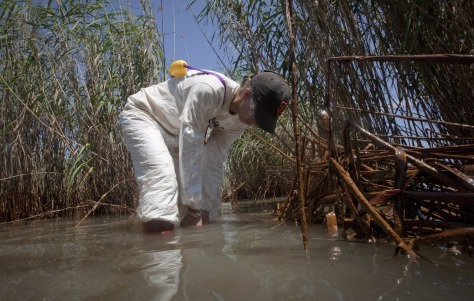 Image: Greenpeace staff member takes sample of water in heavily oiled marsh near South Pass