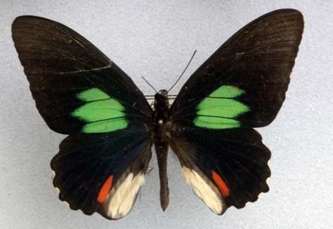 Image: Amazonian butterfly