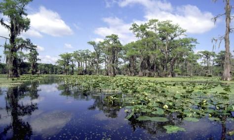 Image: Caddo Lake