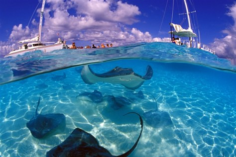 Image: Stingray City