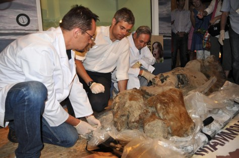 Image: Baby mammoth on display at Musee Crozatier