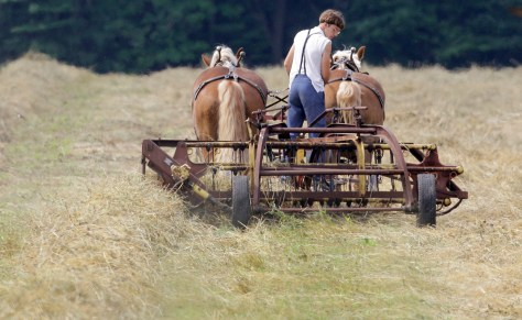 Image: A young Amish man turns over his crop on a farm in Parkman, Ohio