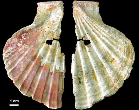 Image: Shells