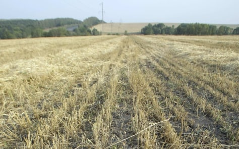 Image:Dried-out wheat field