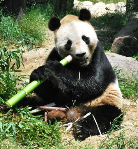Image: Xing Xing