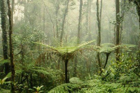 Image: Mt. Kinabalu rainforest