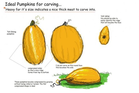 Image: Illustration showing how to choose a pumpkin for carving