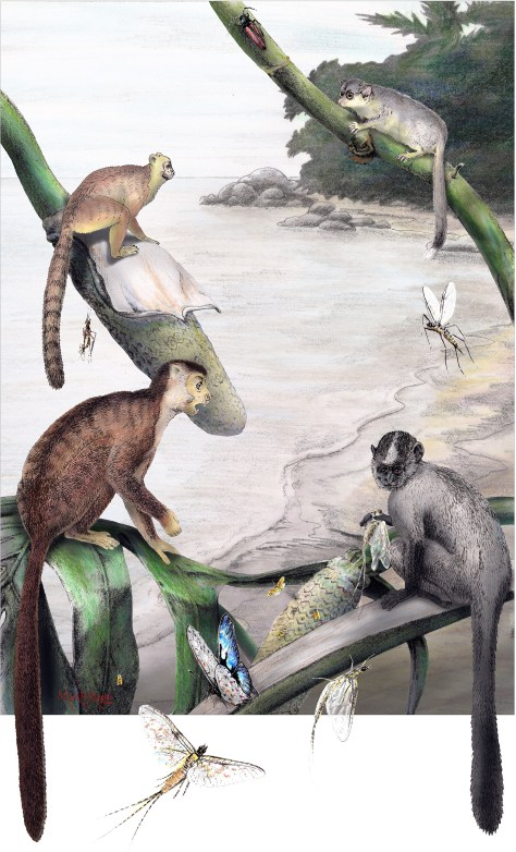 Image: Primate reconstruction