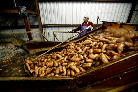 Image:sweet potatoes go through a huge wash bin