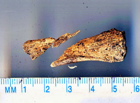Image: Bone fragment