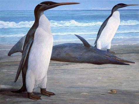 Image: Oligocene penguins