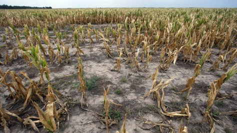 Image: file photo of drought-ridden crops in Argentina