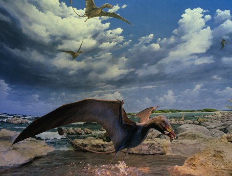 Image: Pterosaur Eudimorphon ranzii