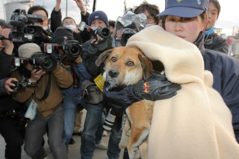 Image: A dog, rescued by Japan Coast Guard on A
